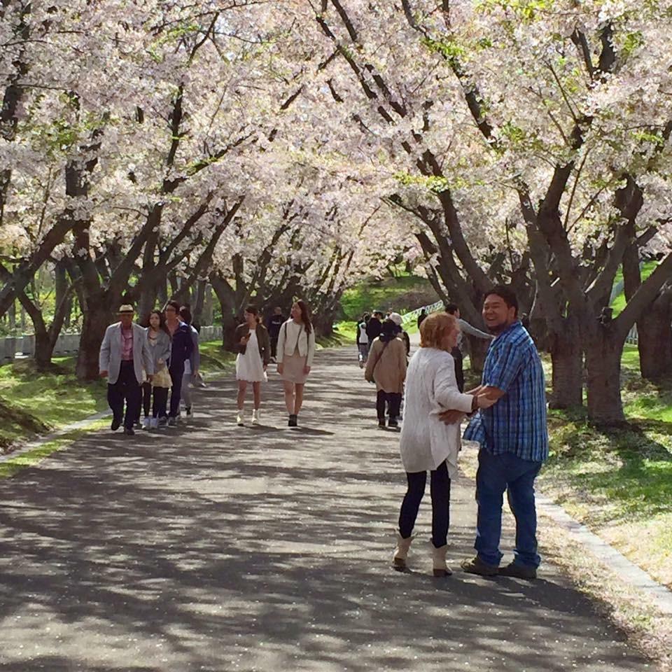 Cherry Blossom Sapporo