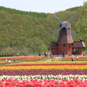 Yubestsu Tulip Farm