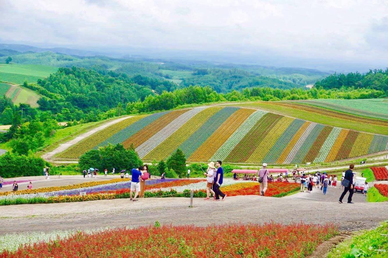 Hokkaido's famous flower fields.