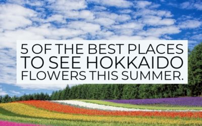 5 of the best places to see Hokkaido flowers this summer.