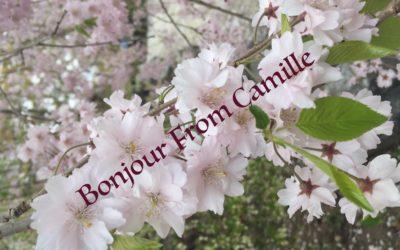 Sakura Camille
