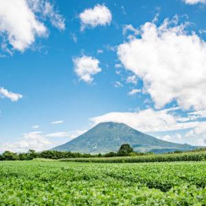 羊蹄山とジャガイモ畑 / 北海道 ニセコ
