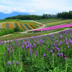 北海道の風景、美瑛